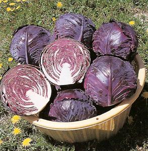 CabbageRubyPerfection