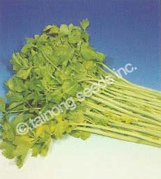 CeleryGolden