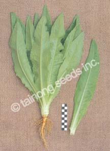 LettuceSwordLeaf