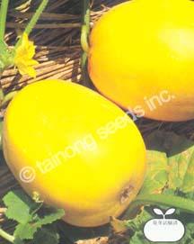 MelonGolden