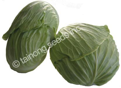 CabbageShoshudori2