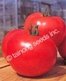 TomatoToughBoy