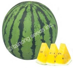 watermelonkogane72