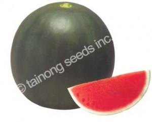 watermelonsamba72
