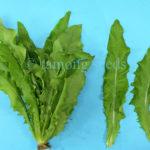 a choy lettuce